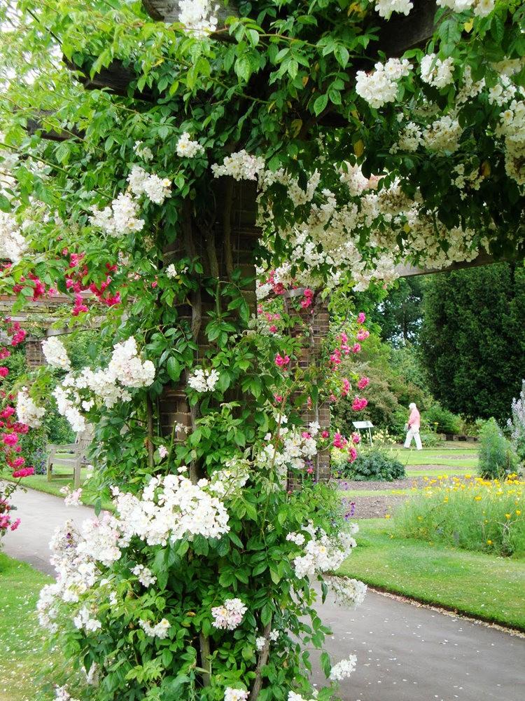 邱园中的植物与花卉_图1-4