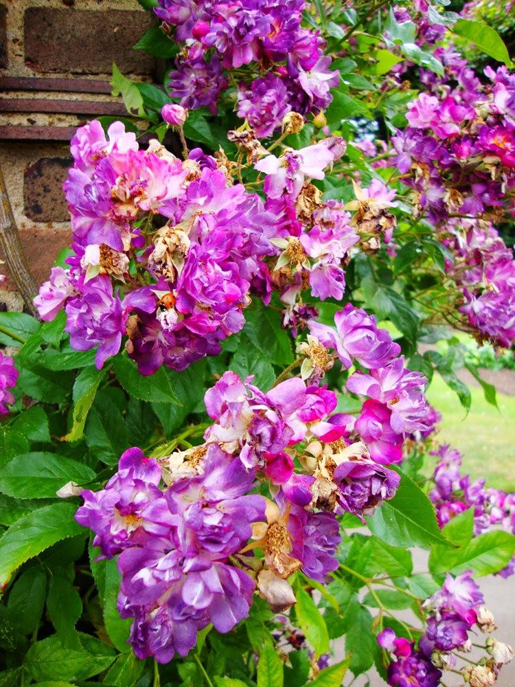 邱园中的植物与花卉_图1-7