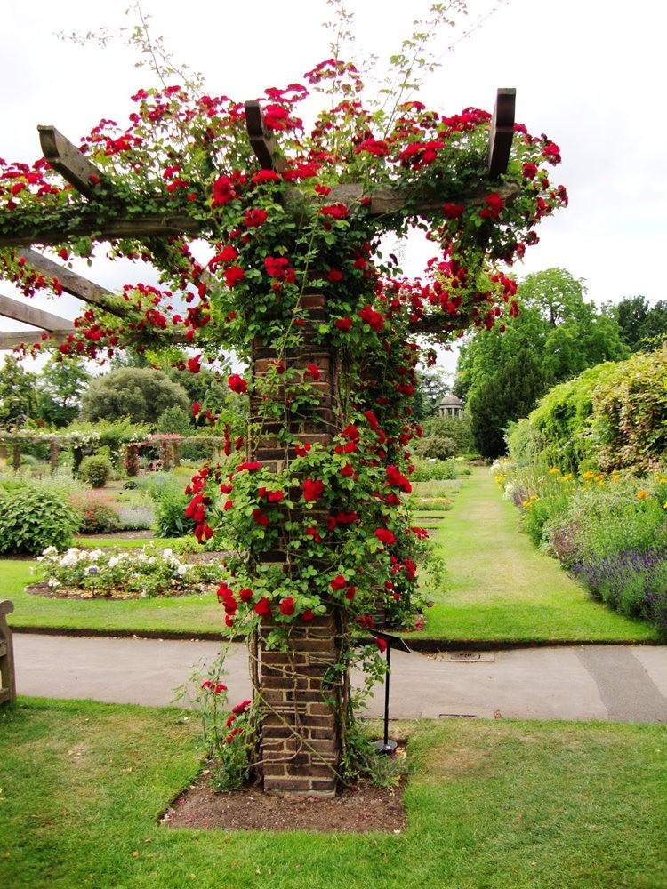 邱园中的植物与花卉_图1-8