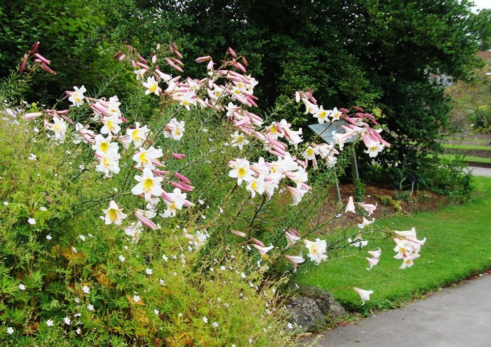 邱园中的植物与花卉_图1-10