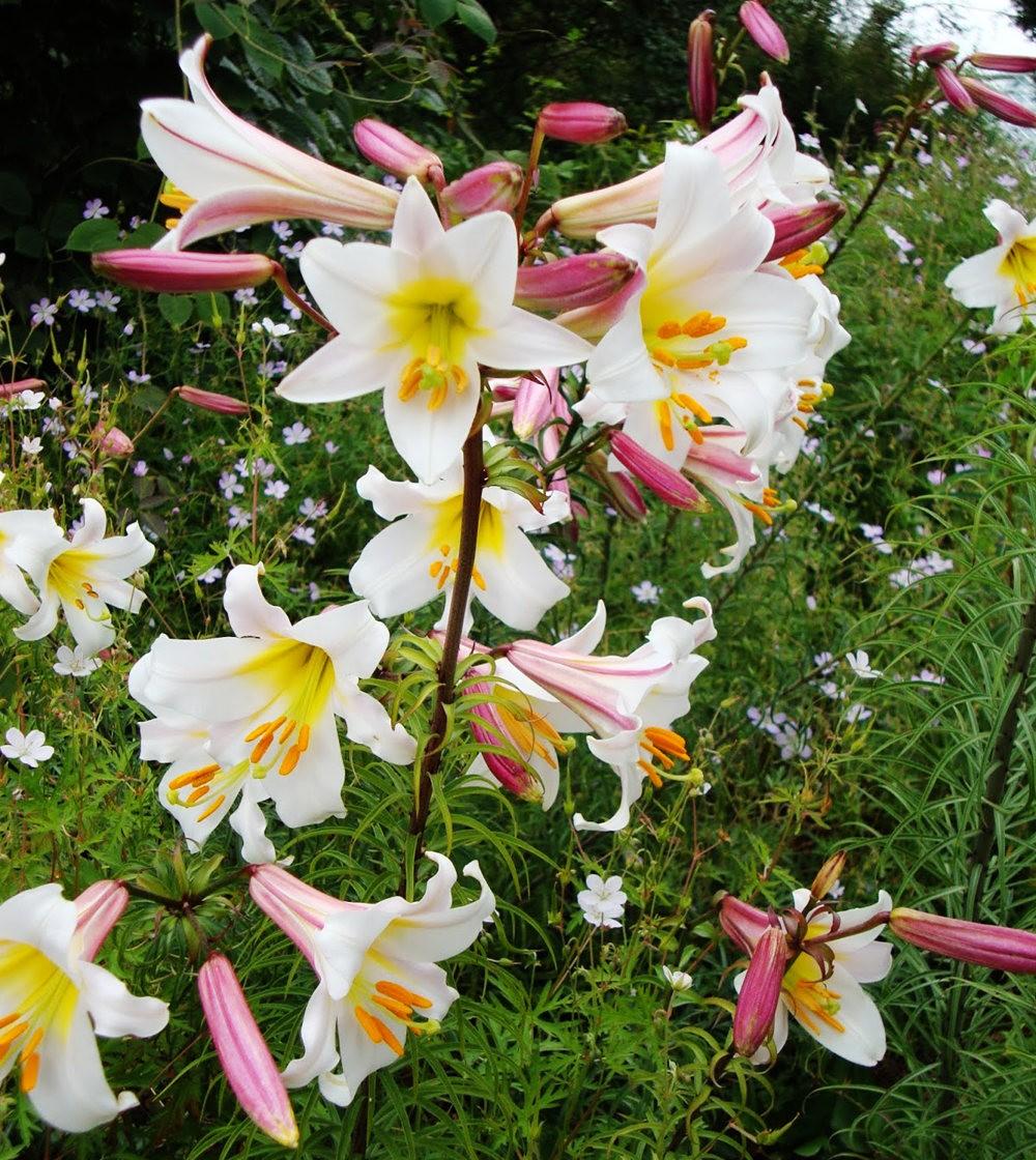 邱园中的植物与花卉_图1-11