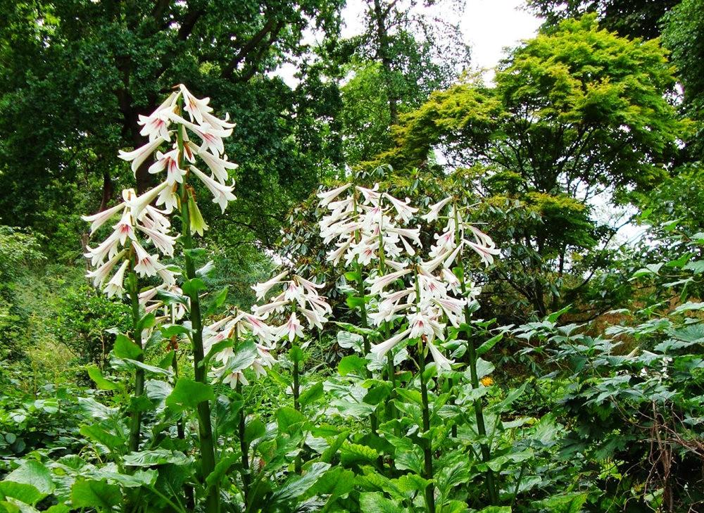 邱园中的植物与花卉_图1-12