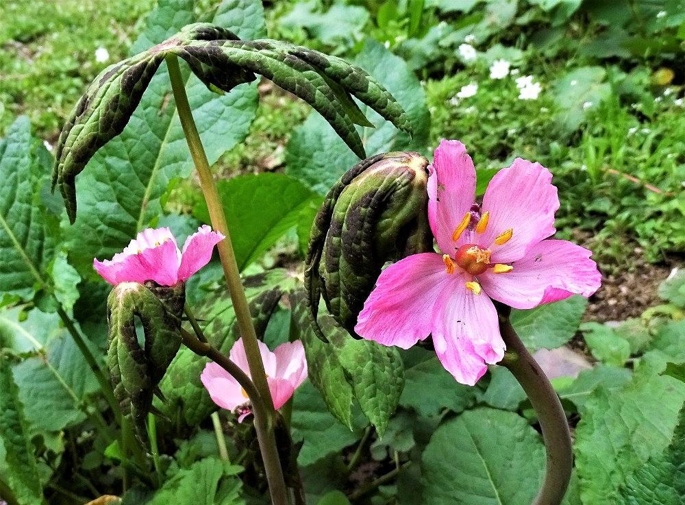 邱园中的植物与花卉_图1-14