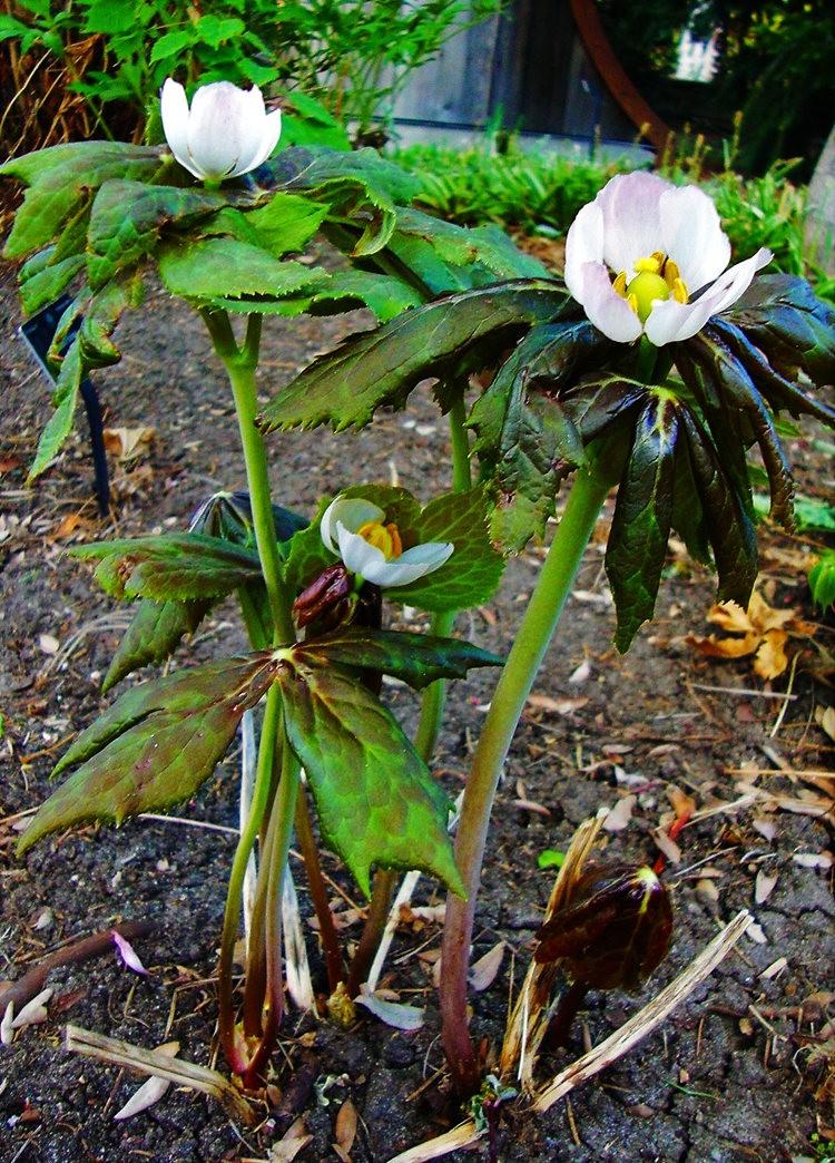 邱园中的植物与花卉_图1-20
