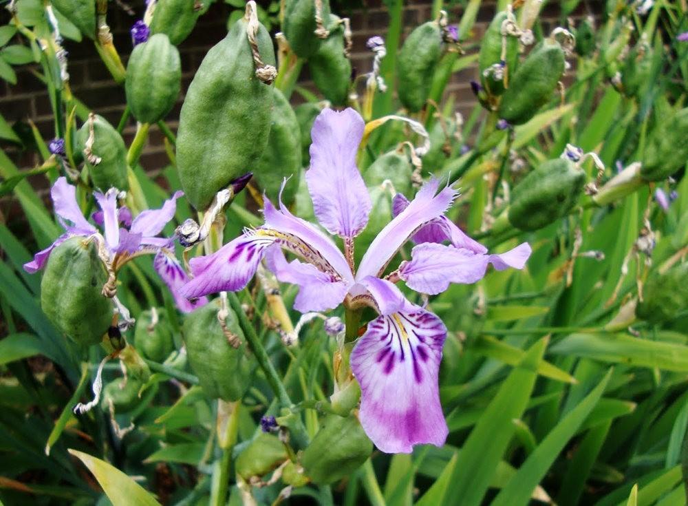 邱园中的植物与花卉_图1-22