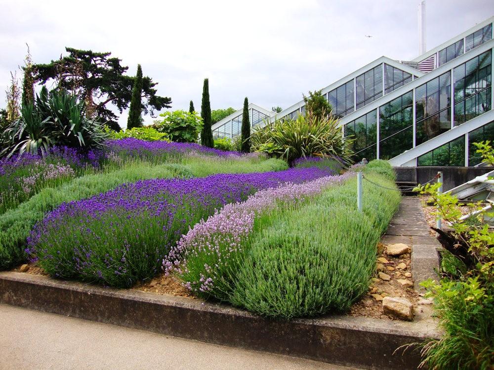 邱园中的植物与花卉_图1-24