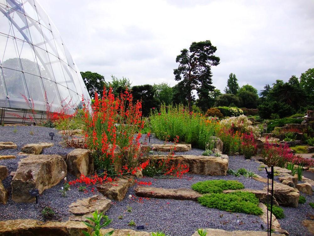 邱园中的植物与花卉_图1-25