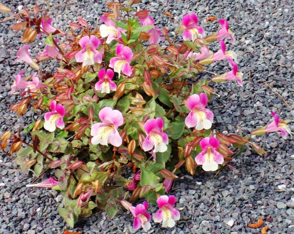 邱园中的植物与花卉_图1-26