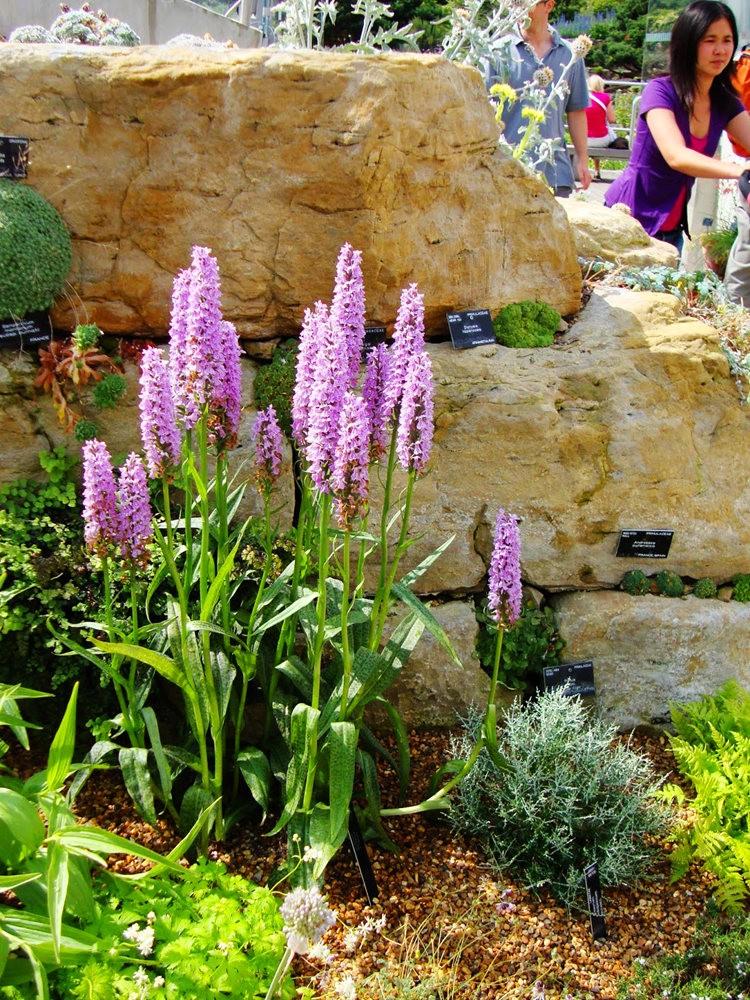 邱园中的植物与花卉_图1-29