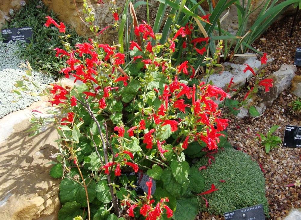 邱园中的植物与花卉_图1-30