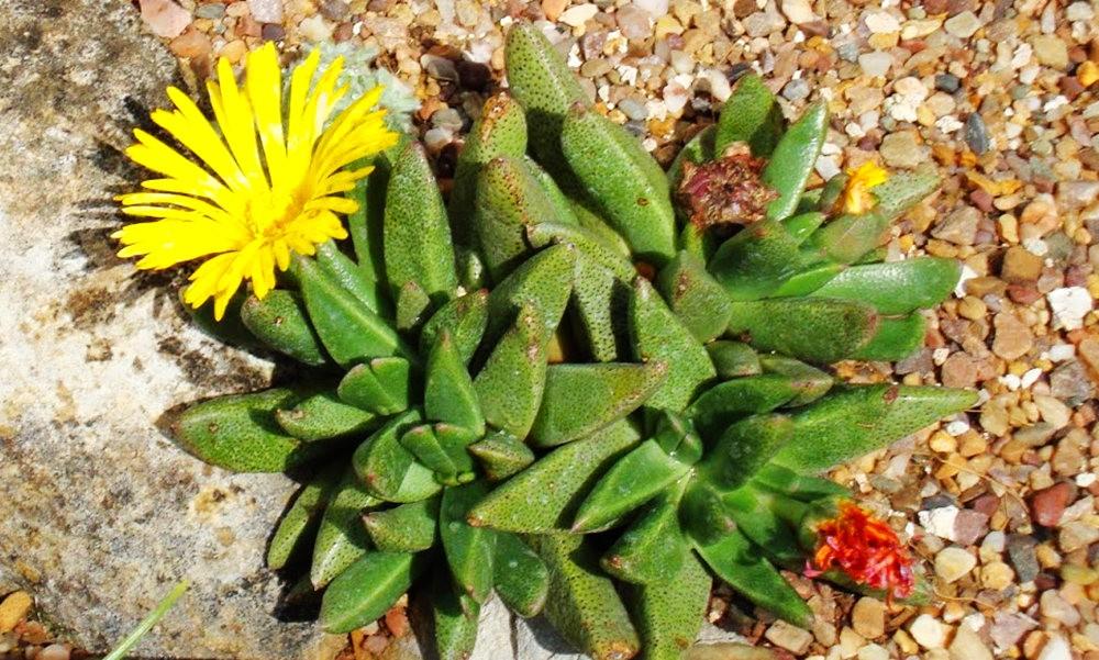 邱园中的植物与花卉_图1-31