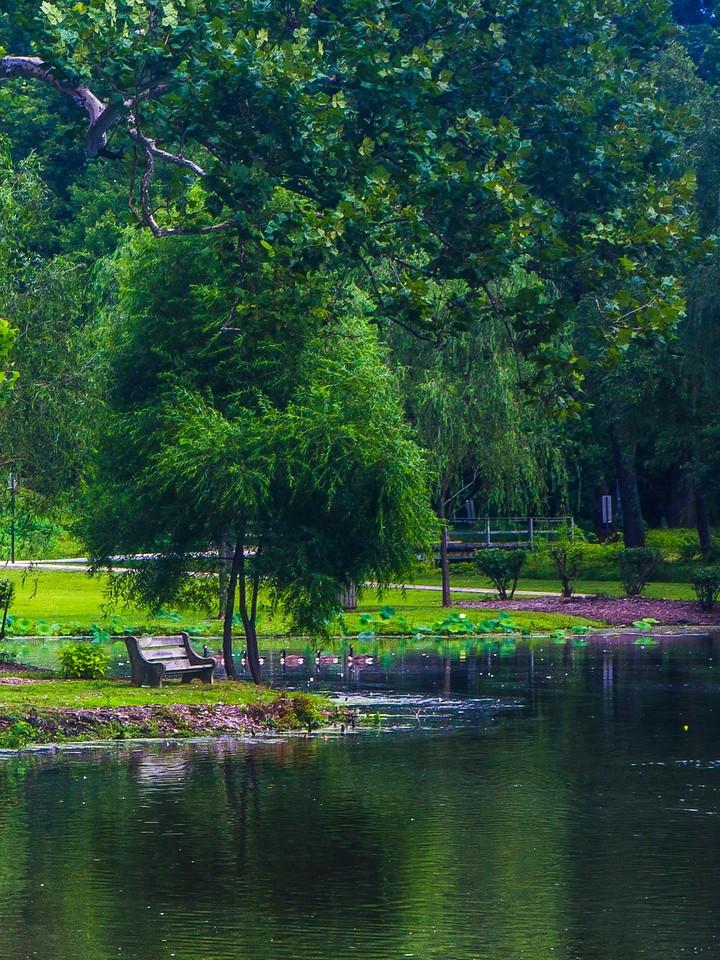 滨州Willows park,湖中喷泉_图1-5
