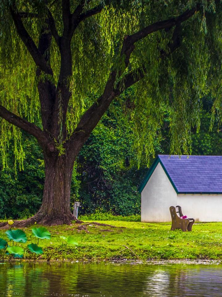 滨州Willows park,湖中喷泉_图1-18