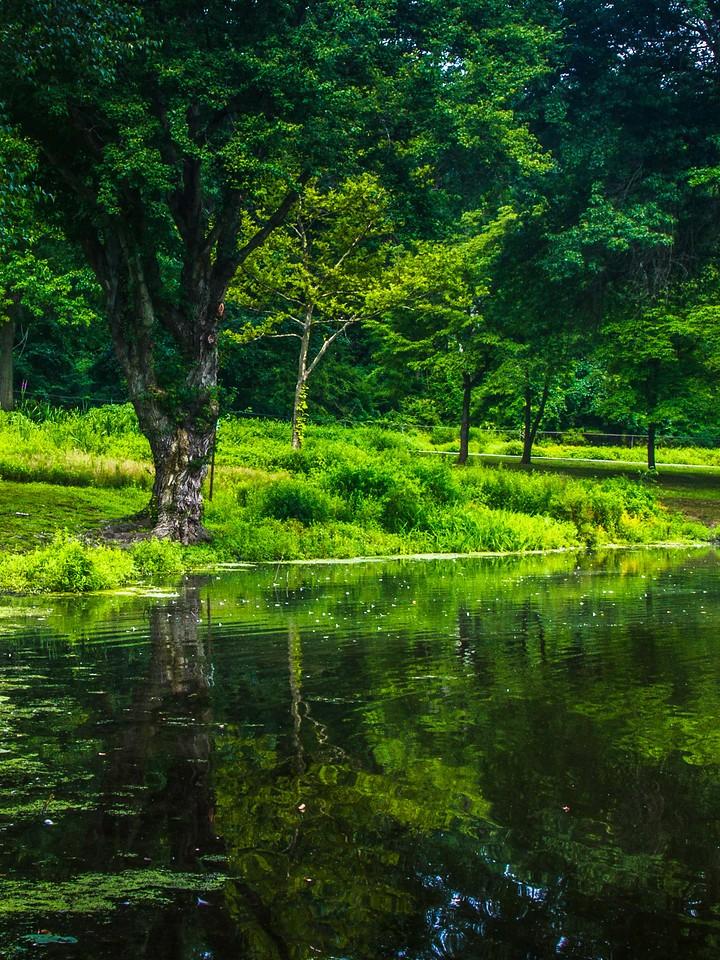 滨州Willows park,湖中喷泉_图1-9