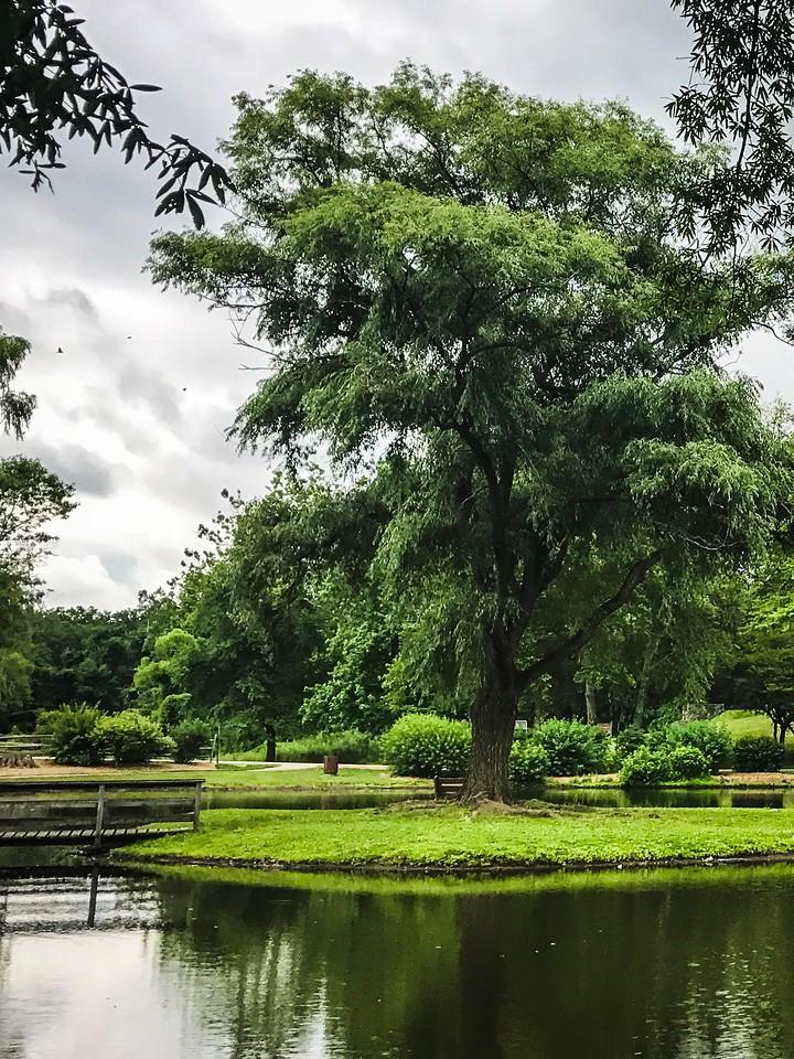 滨州Willows park,湖中喷泉_图1-14