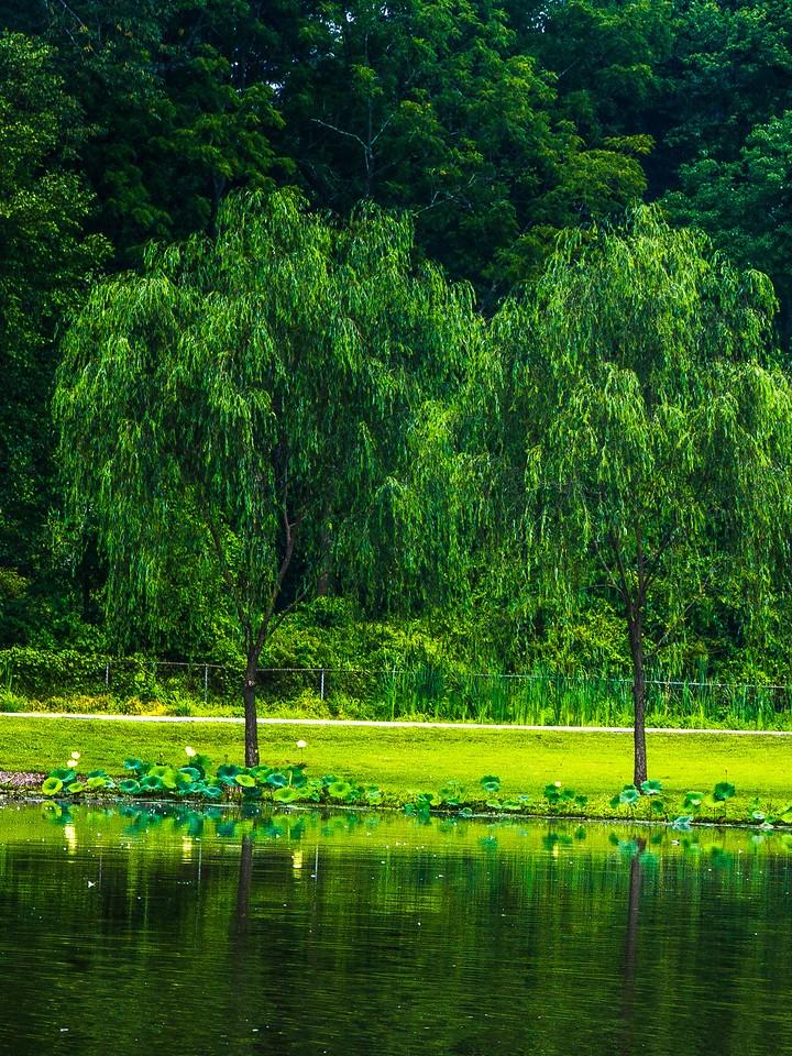 滨州Willows park,湖中喷泉_图1-17