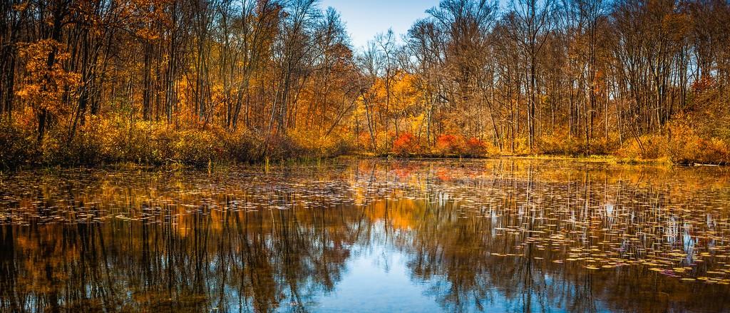 宾州 French Creek State Park,水中秋色_图1-19