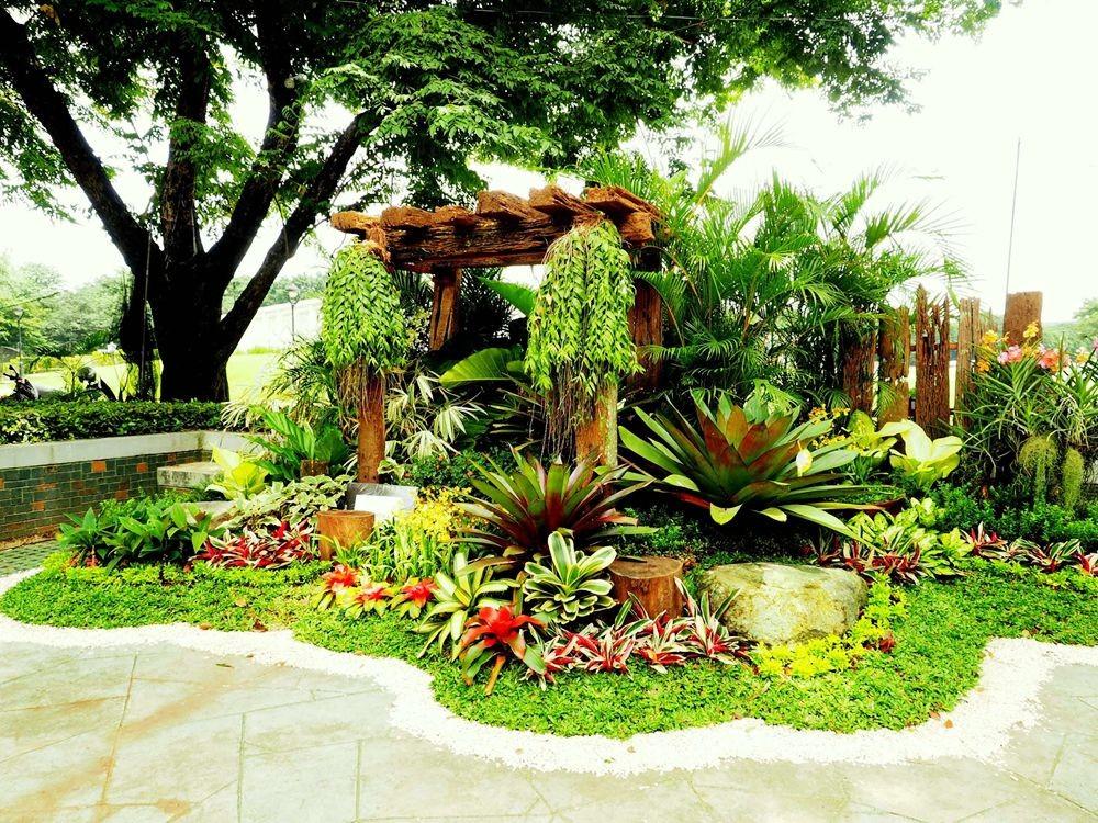 菲律宾的兰花展_图1-1