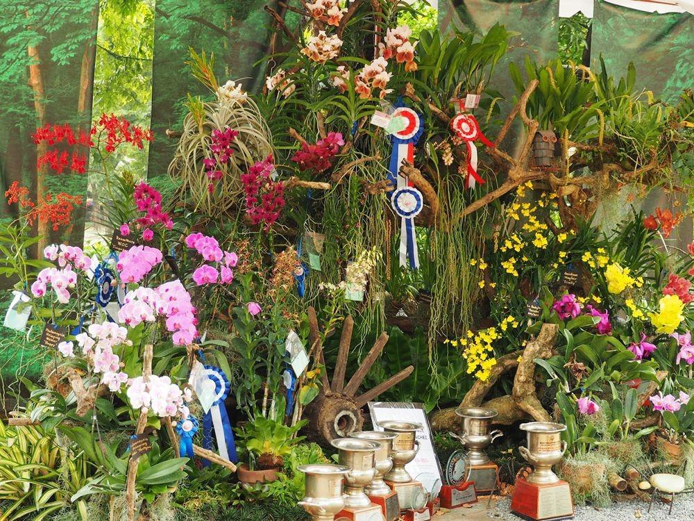 菲律宾的兰花展_图1-3