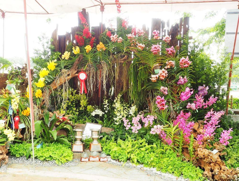 菲律宾的兰花展_图1-4