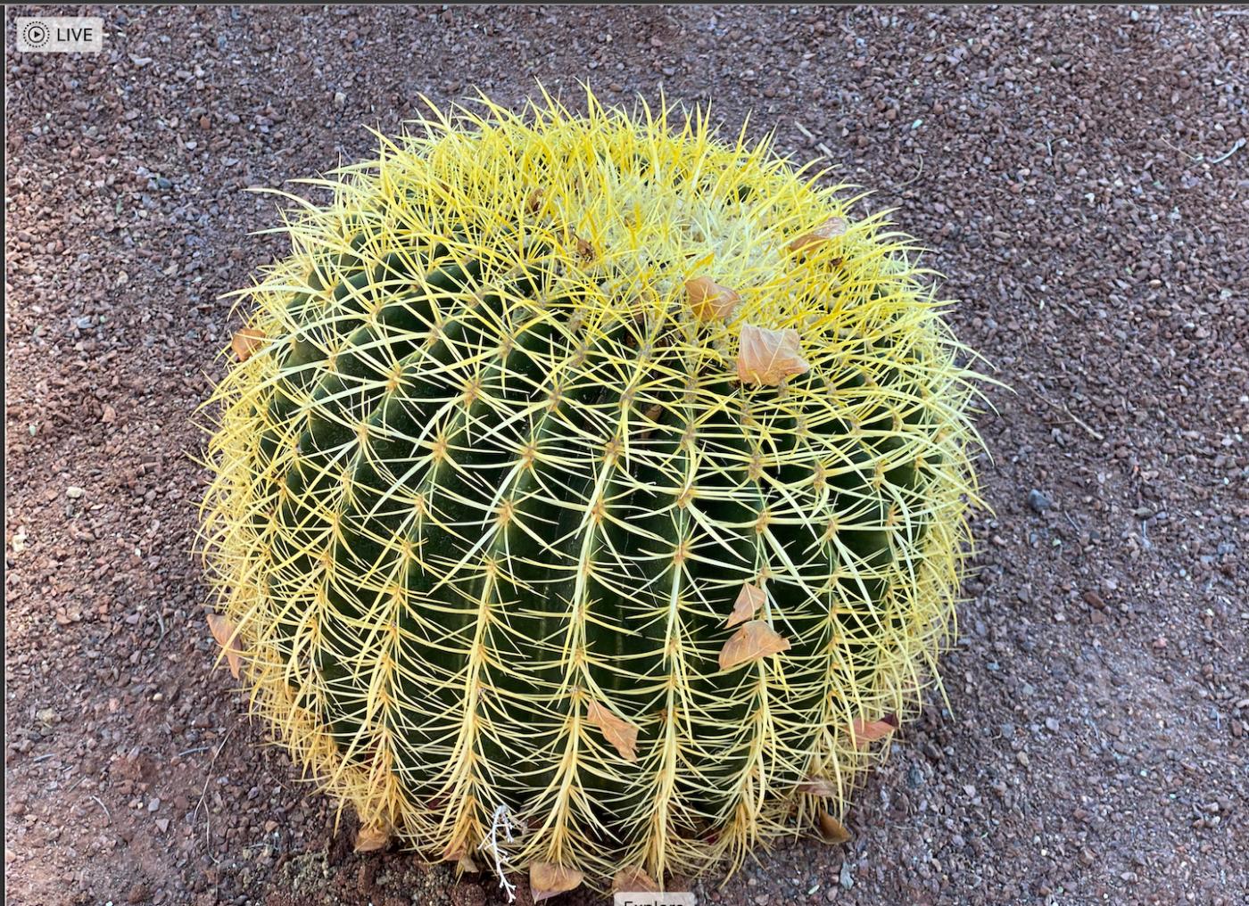 棕榈泉:沙漠中成长起来的美丽城市_图1-10