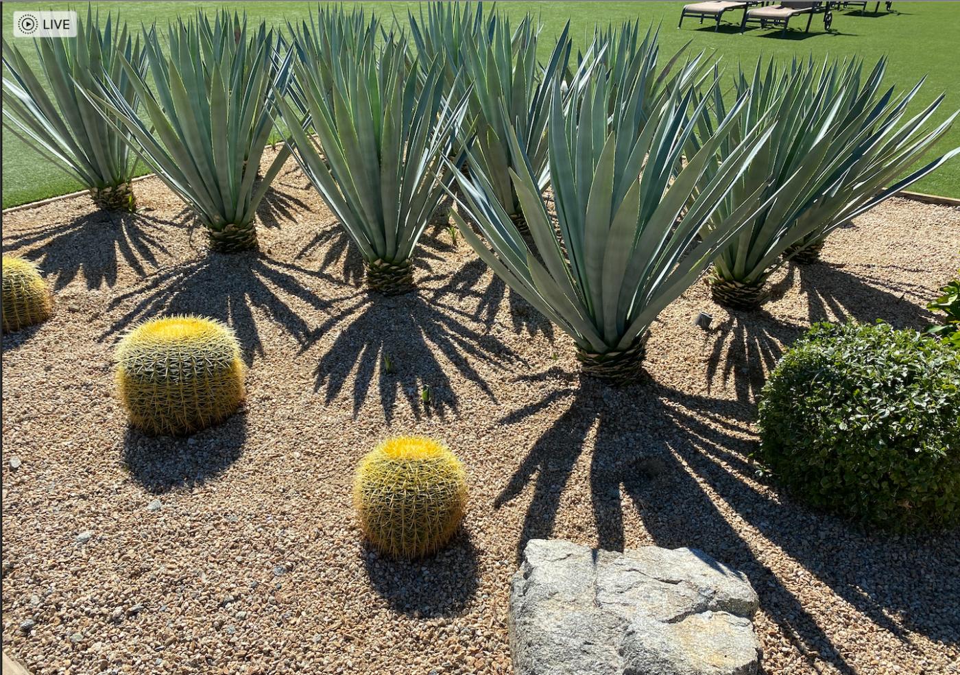棕榈泉:沙漠中成长起来的美丽城市_图1-12