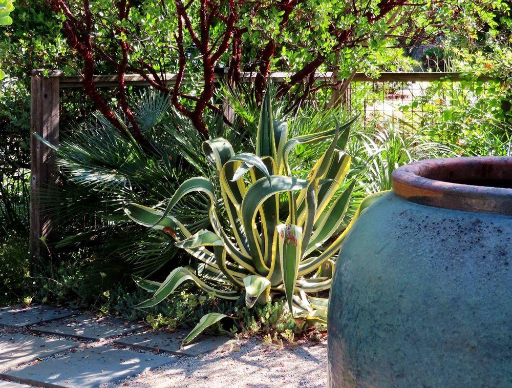 蜂鸟花园在八月_图1-4