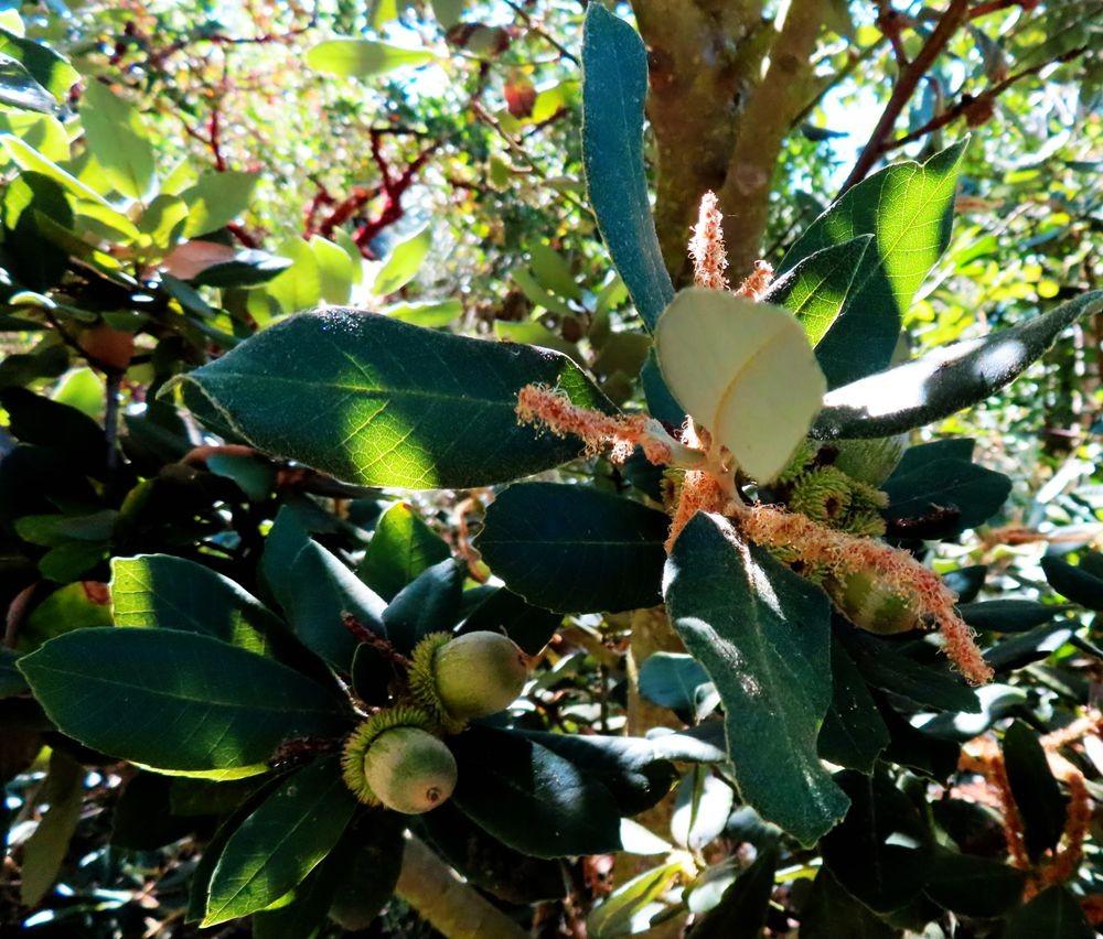蜂鸟花园在八月_图1-6
