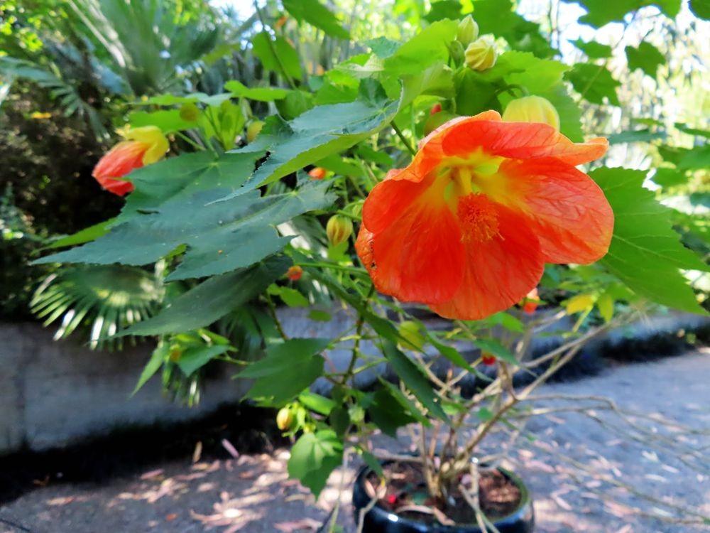 蜂鸟花园在八月_图1-8