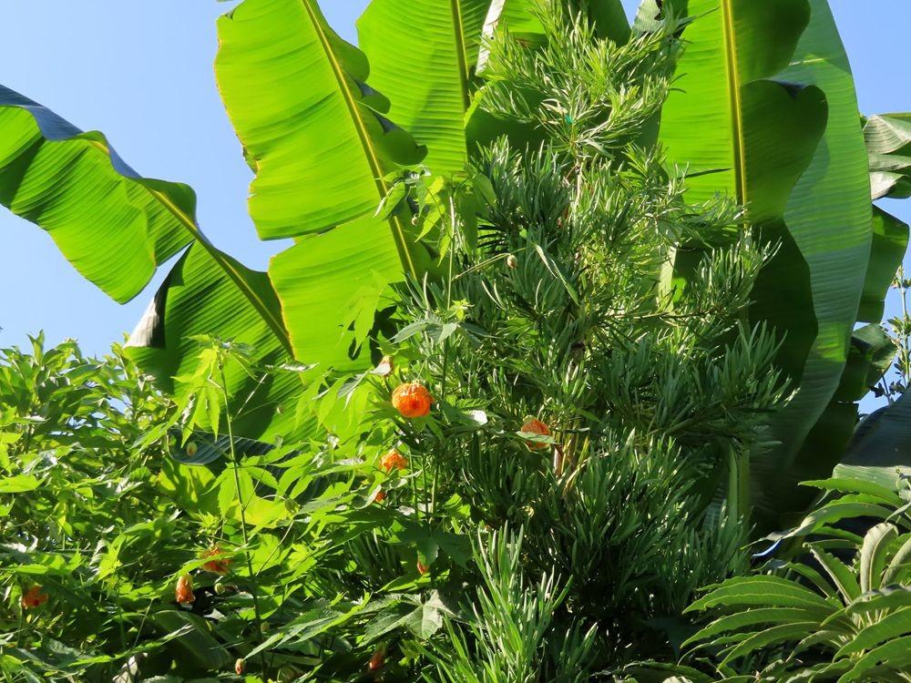 蜂鸟花园在八月_图1-9