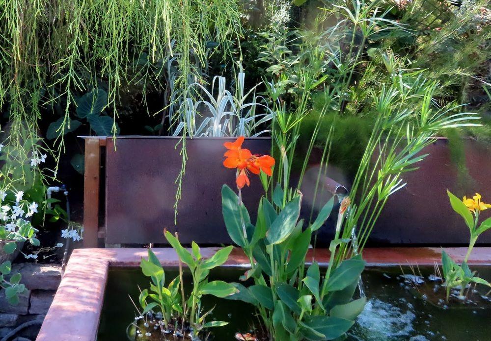 蜂鸟花园在八月_图1-11