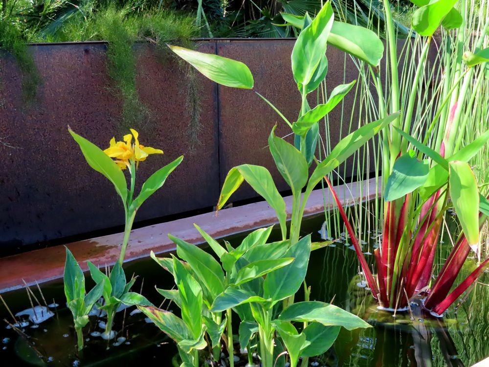蜂鸟花园在八月_图1-13