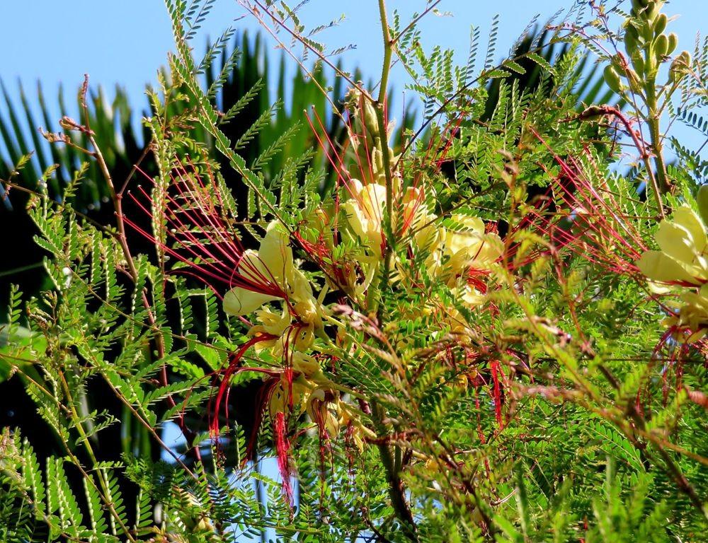 蜂鸟花园在八月_图1-16
