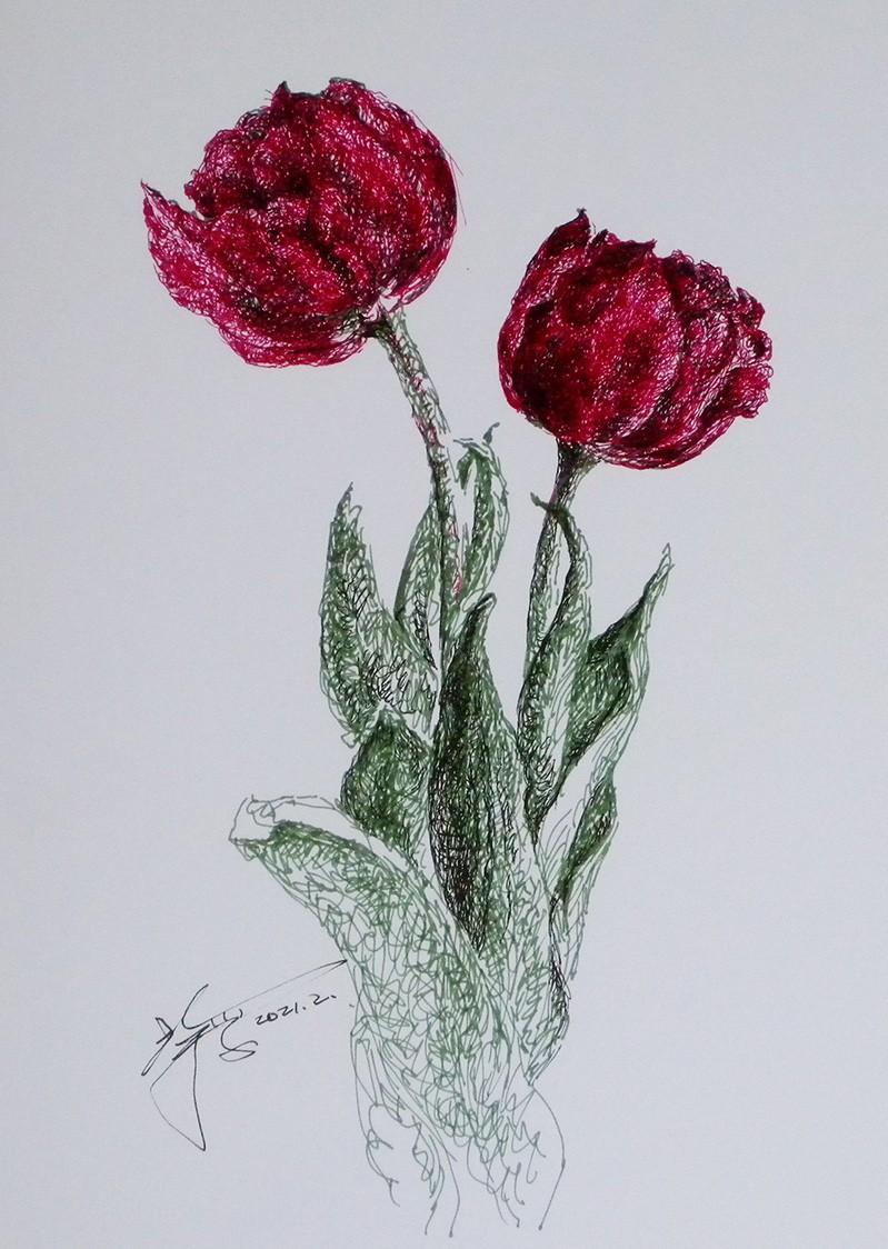 山雪钢笔画——郁金香_图1-1