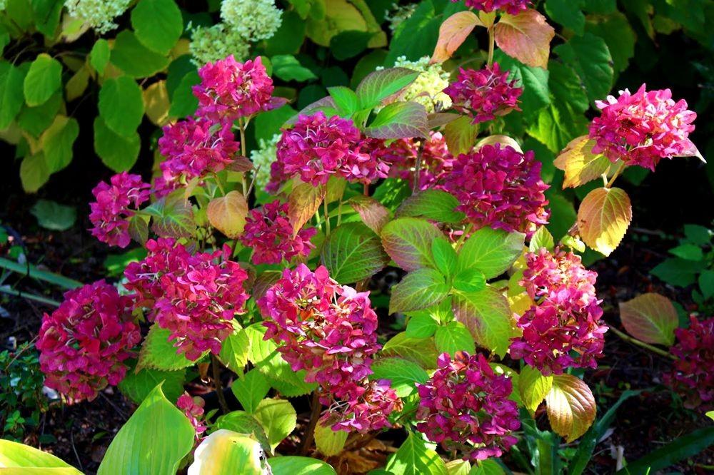 花卉日记之--14_图1-2