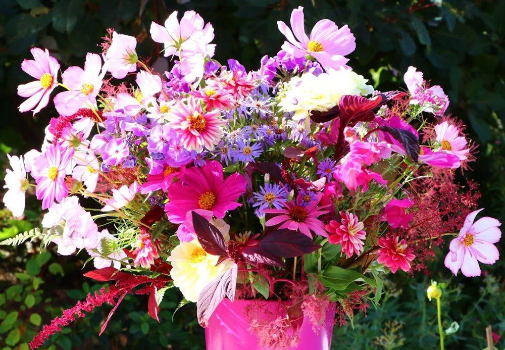 花卉日记之--14_图1-3