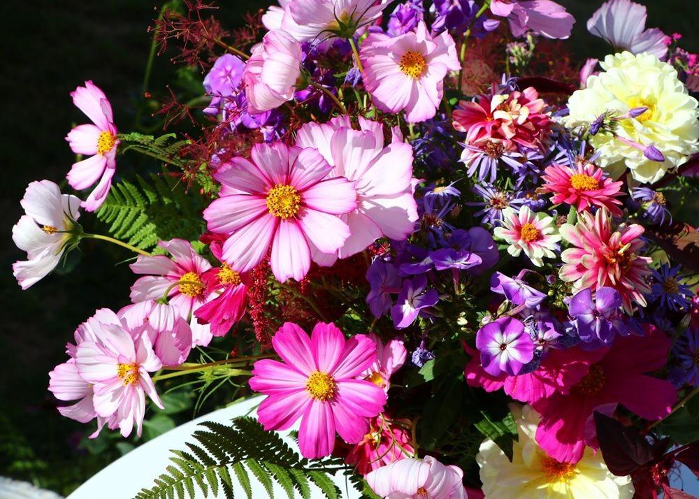 花卉日记之--14_图1-4