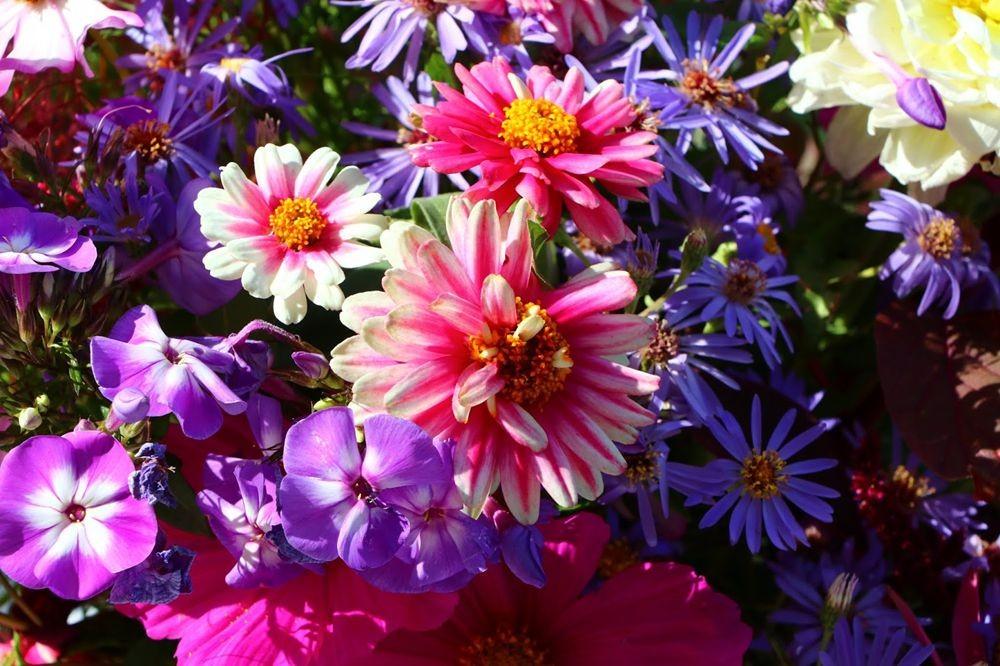 花卉日记之--14_图1-5