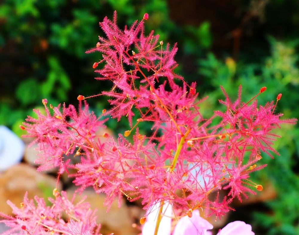 花卉日记之--14_图1-6