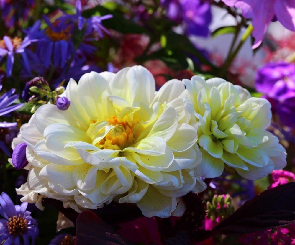 花卉日记之--14_图1-7