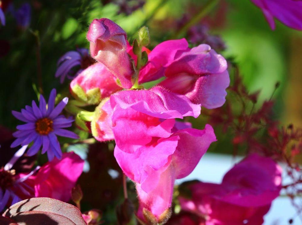 花卉日记之--14_图1-8