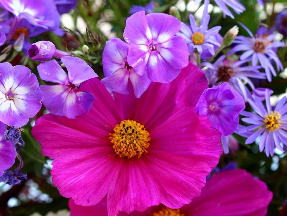 花卉日记之--14_图1-9