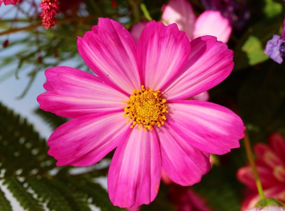 花卉日记之--14_图1-10