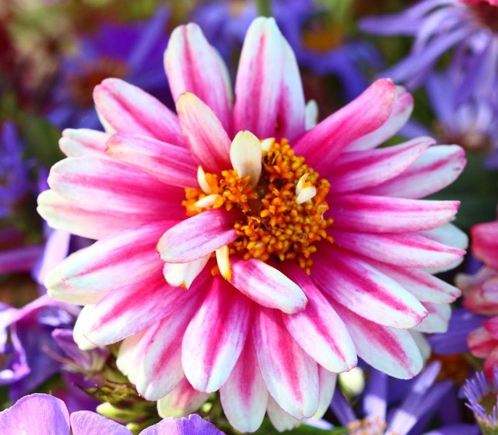 花卉日记之--14_图1-11