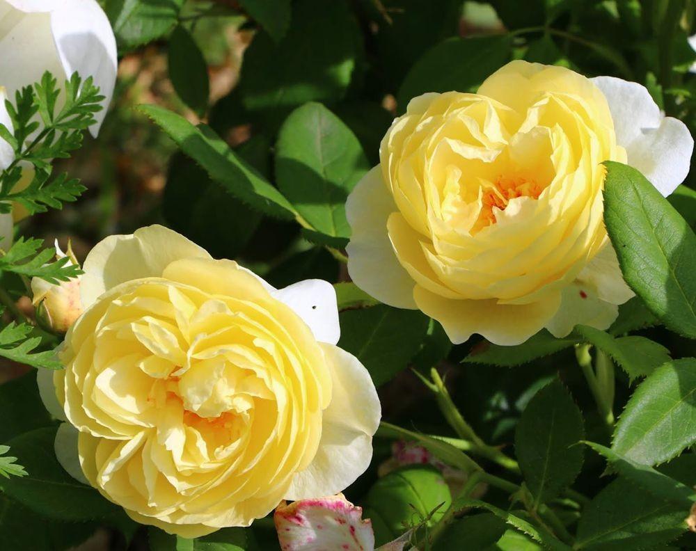 花卉日记之--14_图1-13