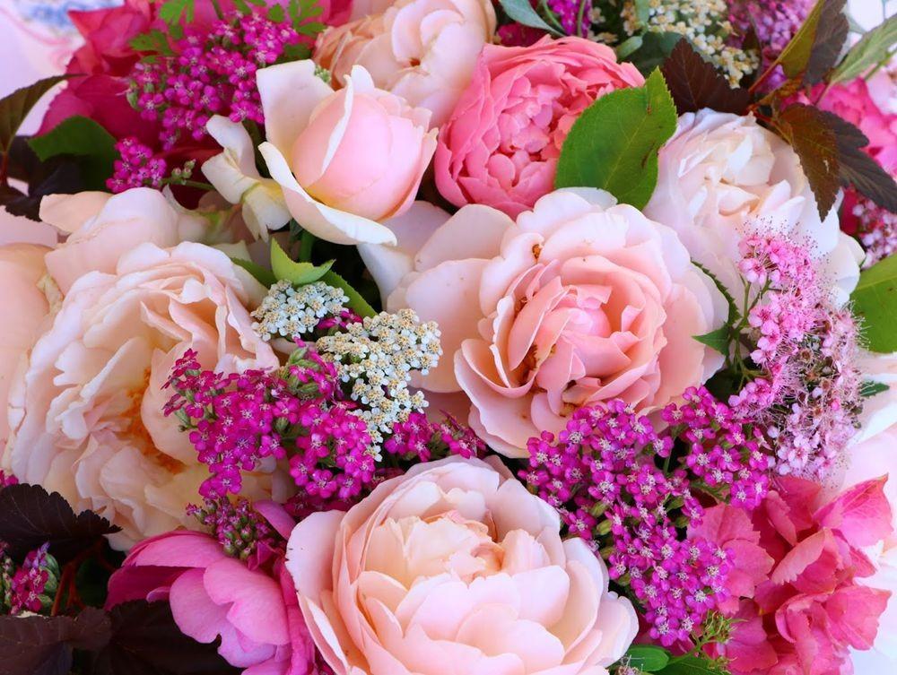 花卉日记之--14_图1-14