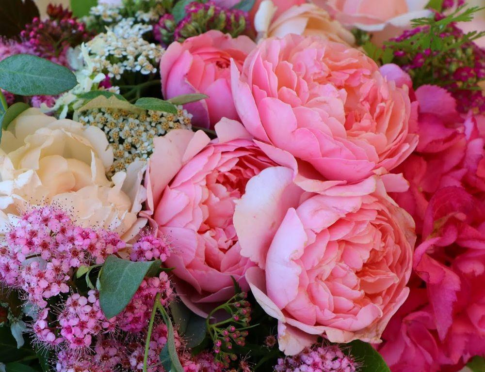 花卉日记之--14_图1-15
