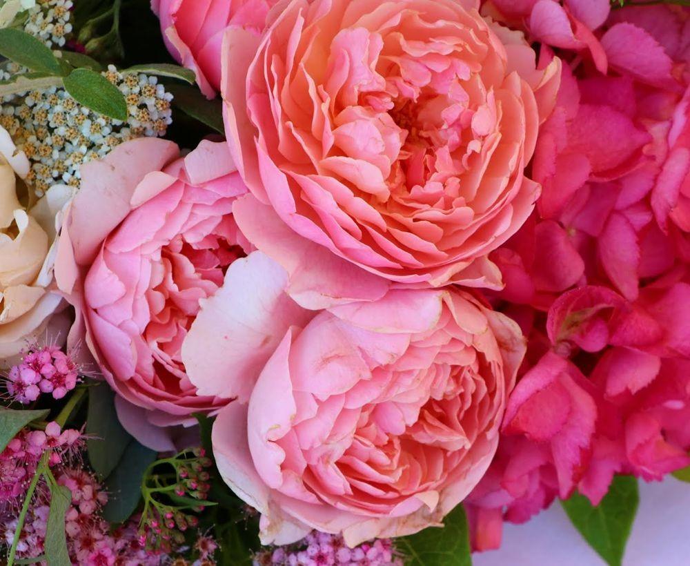 花卉日记之--14_图1-16