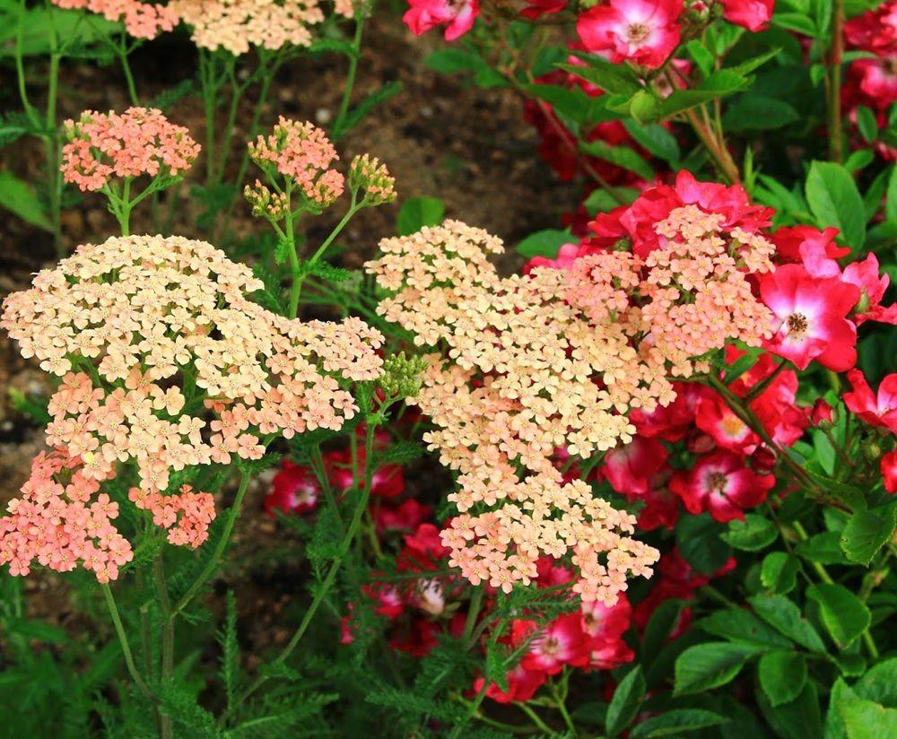 花卉日记之--14_图1-17