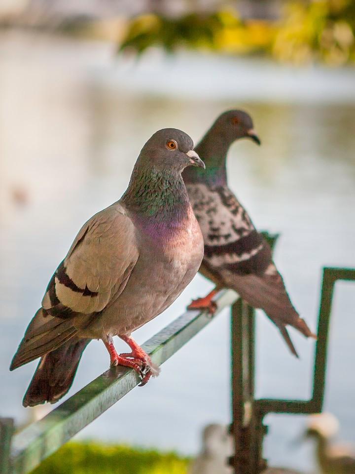 打鸟,昂着头_图1-9
